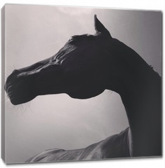 Obraz na płótnie canvas - pferd von unten