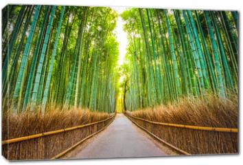 Obraz na płótnie canvas - Bamboo Forest of Kyoto, Japan