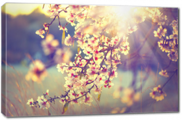 Obraz na płótnie canvas - Beautiful nature scene with blooming tree and sun flare