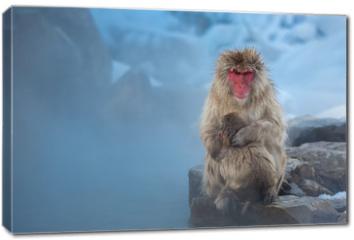 Obraz na płótnie canvas - now monkey Macaque Onsen
