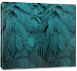 Obraz na płótnie canvas - Aqua Feathers