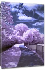 Obraz na płótnie canvas - A path through the park - Infrared landscape