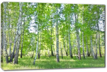 Obraz na płótnie canvas - birch forest
