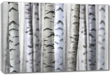 Obraz na płótnie canvas - seamless birch trees