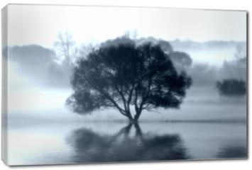 Obraz na płótnie canvas - The Wish Tree