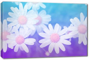 Obraz na płótnie canvas - Flower pastel style.