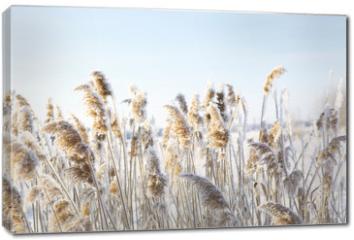 Obraz na płótnie canvas - Frozen dry grass.