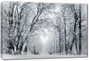 Obraz na płótnie canvas - Winter scenery, snowstorm in park