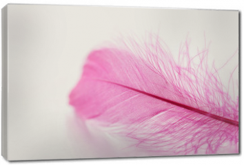 Obraz na płótnie canvas - Tender feather on light background for your design, pink color, copy space for text