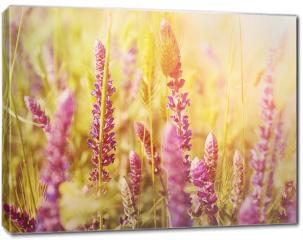 Obraz na płótnie canvas - Fioletowe kwiaty na łące
