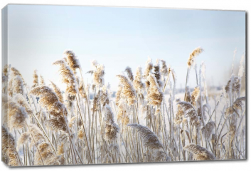 Obraz na płótnie canvas - Zamarznięta trawa