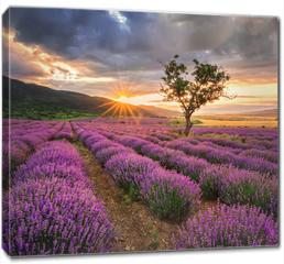 Obraz na płótnie canvas - Stunning landscape with lavender field at sunrise