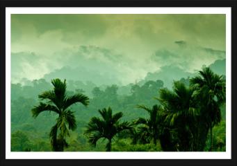 Obraz w ramie - Selva de Sumatra