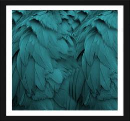 Obraz w ramie - Aqua Feathers