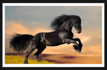 Obraz w ramie - Koń fryzyjski galopujący o wschodzie słońca