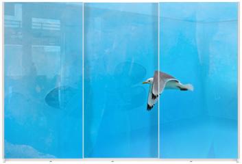 Panel szklany do szafy przesuwnej - Black-legged Kittiwake, Rissa tridactyla, with blue ice glacier, iceberg, in background, Svalbard, Norway