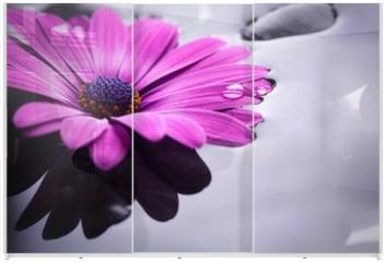 Panel szklany do szafy przesuwnej - gerbera fucsia