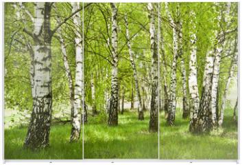 Panel szklany do szafy przesuwnej - Brzozowy zagajnik wczesną wiosną w pogodny dzień, Młode brzozy z młodymi zielonymi liśćmi w świetle słońca.