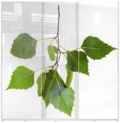 Panel szklany do szafy przesuwnej - twig of birch tree with green leaves and catkins