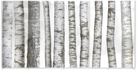 Panel szklany do szafy przesuwnej - Verschiedene Birkenstämme, isoliert auf weißem hintergrund