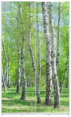 Panel szklany do szafy przesuwnej - Birch Grove, early summer morning