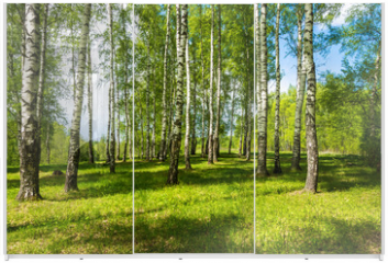 Panel szklany do szafy przesuwnej - Birch grove on a bright Sunny day.