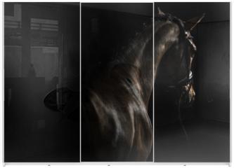 Panel szklany do szafy przesuwnej - Elegant sport horse