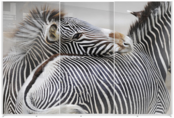 Panel szklany do szafy przesuwnej - Zebra