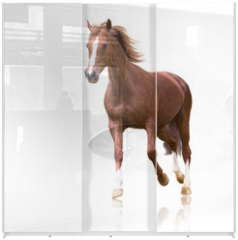 Panel szklany do szafy przesuwnej - red horse with the three white legs and white line on the face isolated on white background runs