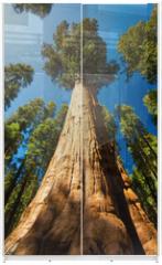 Panel szklany do szafy przesuwnej - Giant Sequoia
