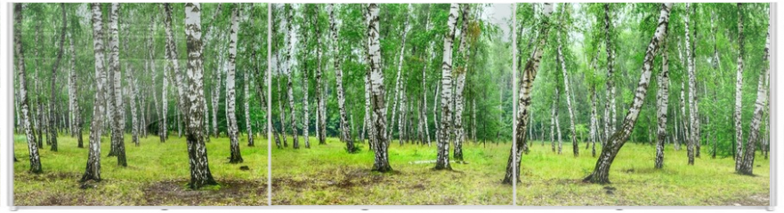 Panel szklany do szafy przesuwnej - Birch grove on a sunny summer day, landscape banner, huge panorama