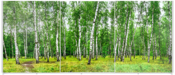 Panel szklany do szafy przesuwnej - Birch grove with a road on sunny summer day, summertime landscape