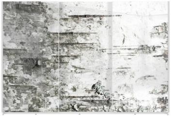 Panel szklany do szafy przesuwnej - White old birch tree bark. Closeup