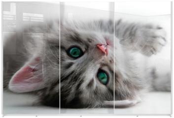 Panel szklany do szafy przesuwnej - Kitten rest - isolated