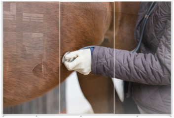 Panel szklany do szafy przesuwnej - vet at work with stethoscope at a horse