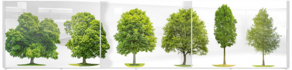 Panel szklany do szafy przesuwnej - Collection trees maple oak birch chestnut Isolated nature objects