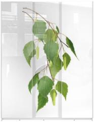 Panel szklany do szafy przesuwnej - Birch leaves isolated on white background