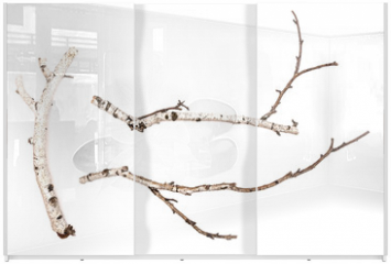 Panel szklany do szafy przesuwnej - Birch branches isolated on white background. Natural decoration elements.