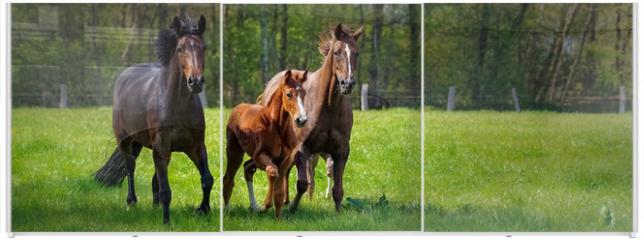 Panel szklany do szafy przesuwnej - Pferdehaltung - zwei Pferde und ein Fohlen toben ausgelassen auf einer grünen Pferdekoppel