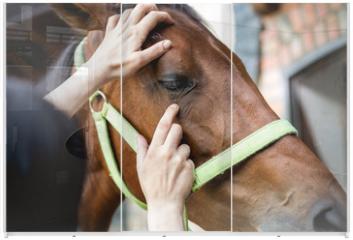 Panel szklany do szafy przesuwnej - Vet checking horse's helth,eyes