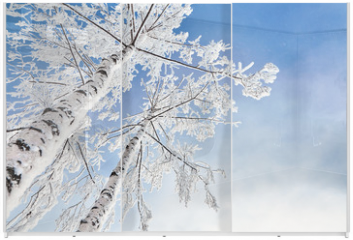 Panel szklany do szafy przesuwnej - birch covered with hoarfrost