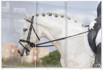 Panel szklany do szafy przesuwnej - Retrato de un caballo español durante una competicion de doma clasica
