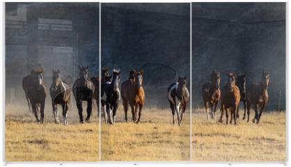 Panel szklany do szafy przesuwnej - Morning Herd