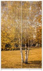 Panel szklany do szafy przesuwnej - birch in the park