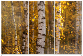 Panel szklany do szafy przesuwnej - Birches in the forest in autumn as a background