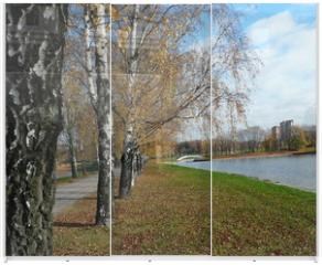 Panel szklany do szafy przesuwnej - birch alley at autumn