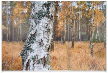 Panel szklany do szafy przesuwnej - Birch tree trunk in an autumnal forest, selective focus.