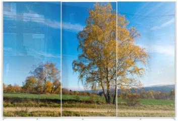 Panel szklany do szafy przesuwnej - Birkengruppe