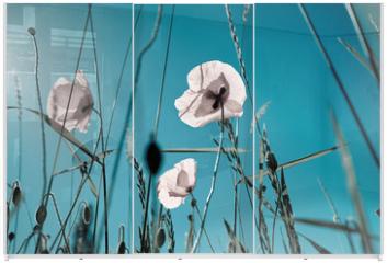 Panel szklany do szafy przesuwnej - Mohnblumen Papaver rhoeas