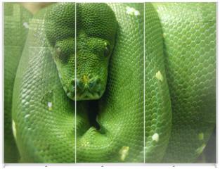 Panel szklany do szafy przesuwnej - green snake